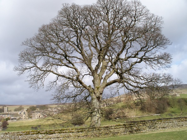 Favourite tree