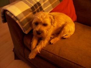 Maud on sofa